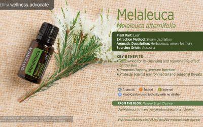 Essential Oils: 5 Tea Tree Essential Oil Treatments